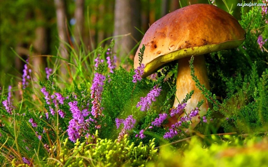 trawa-jesien-grzyb-prawdziwek-wrzos.jpeg