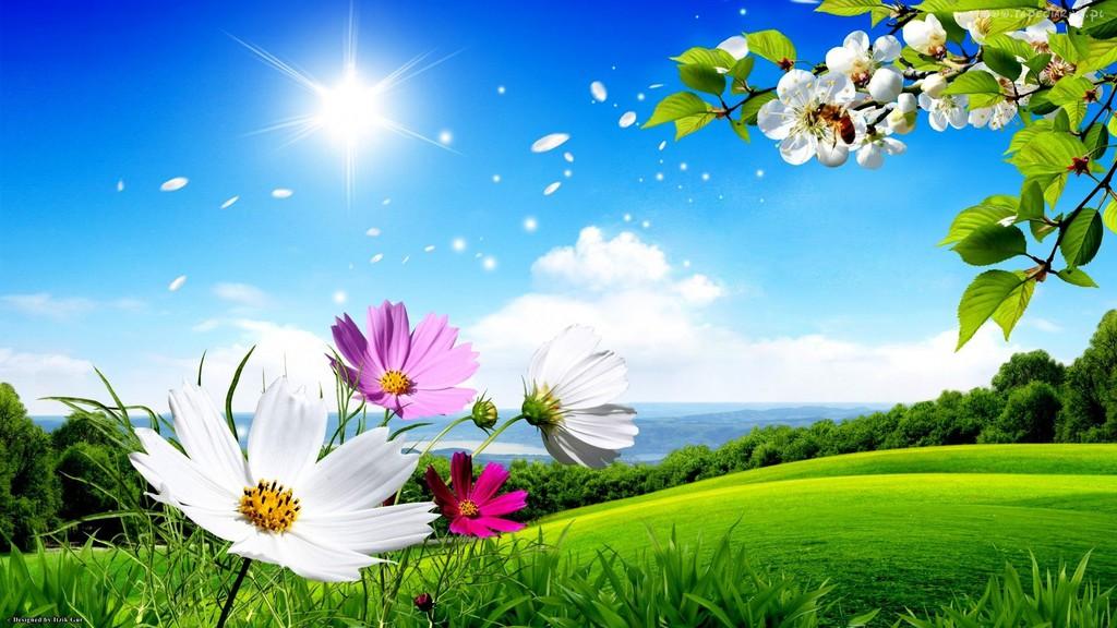163453_laka_promienie_slonca_lato_kolorowe_kwiaty.jpeg