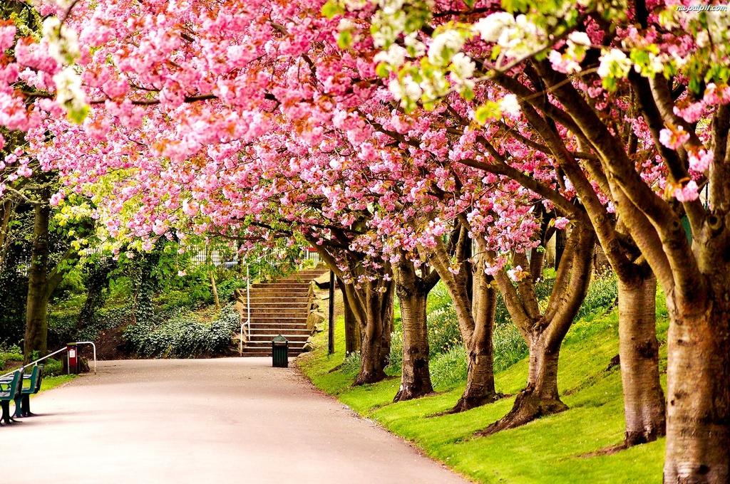 anglia-park-drzewa-brytania-wiosna-wielka.jpeg